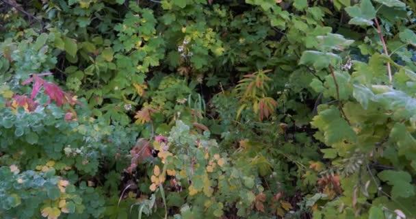 Střední rychlostní pánev napravo s přirozeným listím na straně stinné turistické stezky v lese
