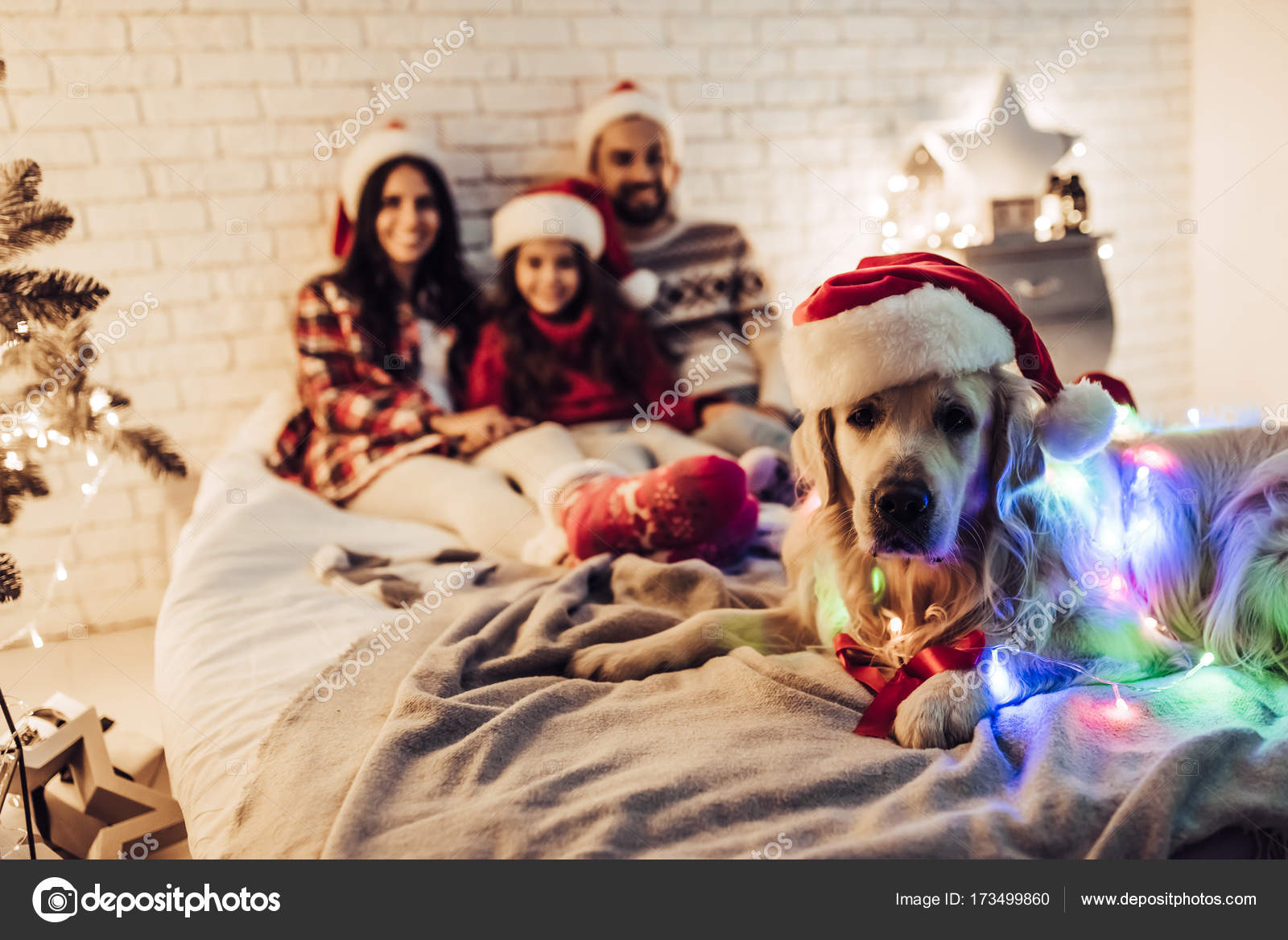A Letto Con Eva.Family With Dog On New Year S Eve Stock Photo C 4pmphoto