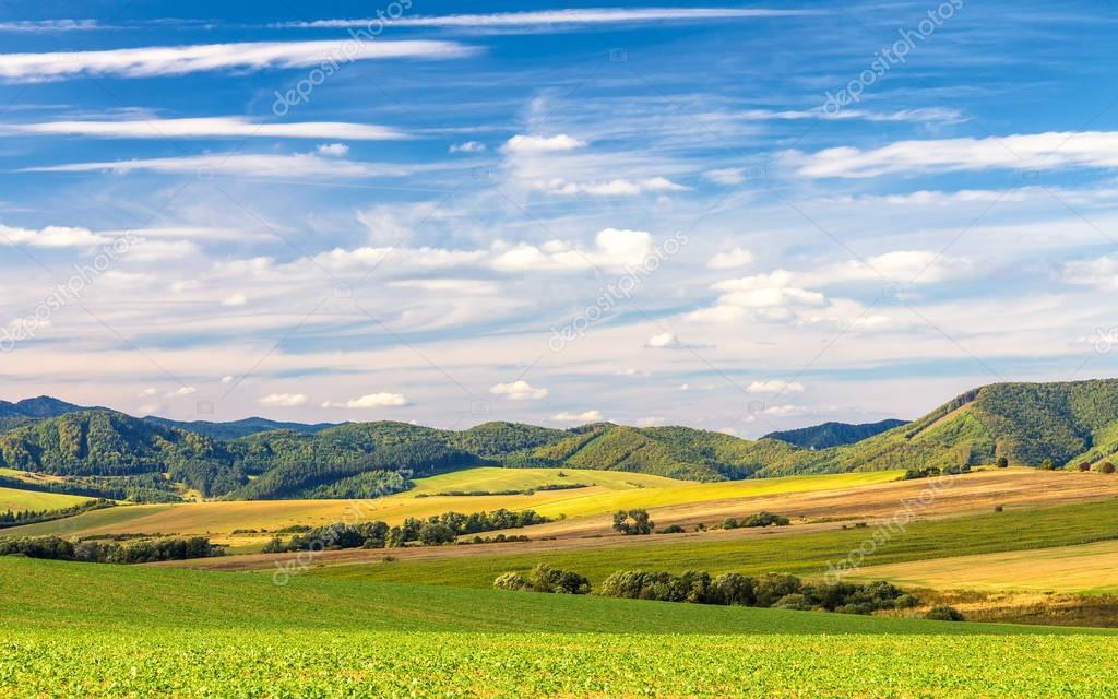 Sunny rural landscape.