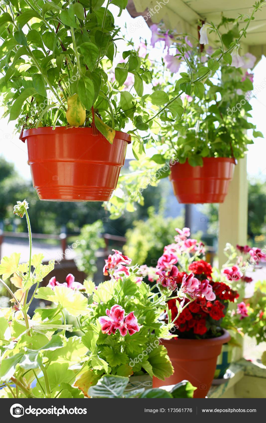Blumen In Topfen Auf Dem Balkon Fenster Fensterbank Fenster Fruhling