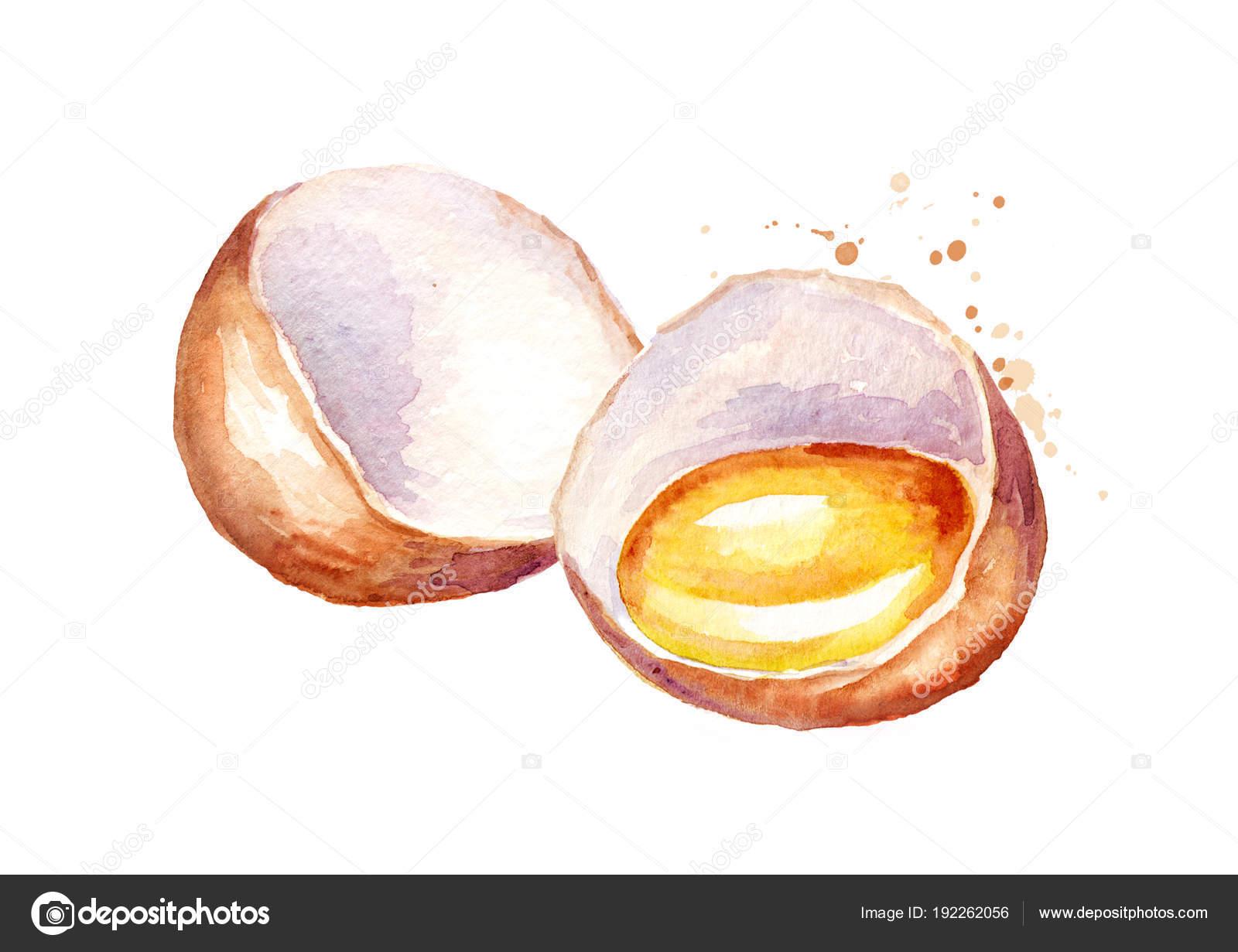 Broken Egg Watercolor Hand Drawn Illustration Isolated White