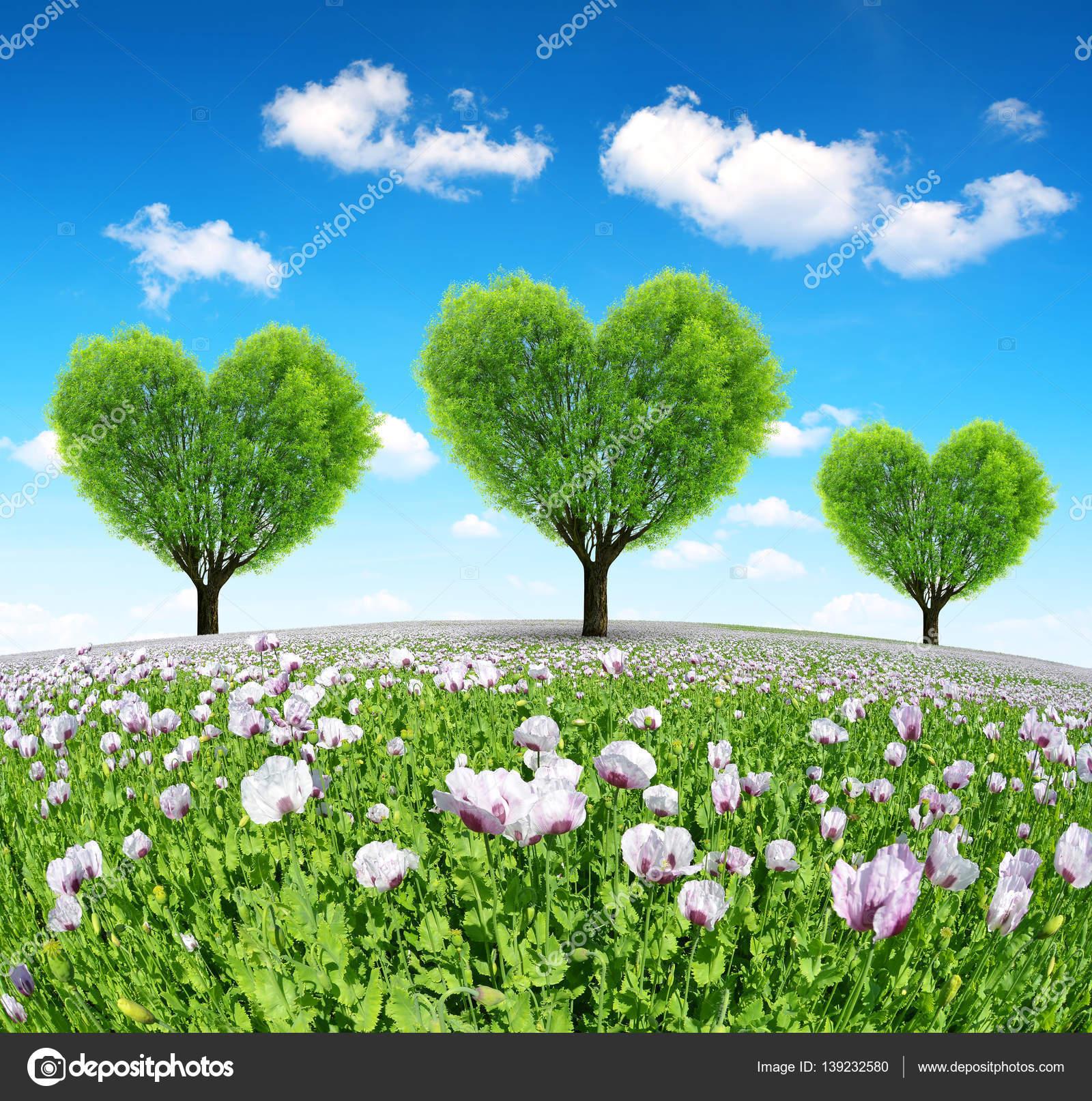 Campo De Amapolas Con árboles En Forma De Corazón Fotos De Stock