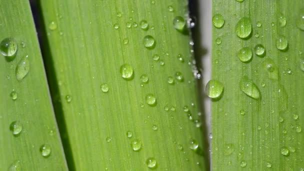 eső cseppek egy zöld levél