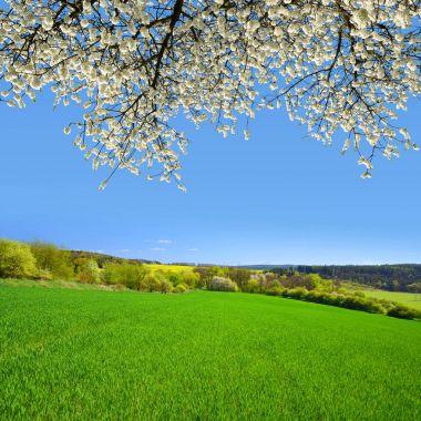 """Картина, постер, плакат, фотообои """"весенний пейзаж в солнечный день . печать картины"""", артикул 150364086"""