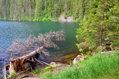 Black lake in the National park Sumava, Czech Republic.