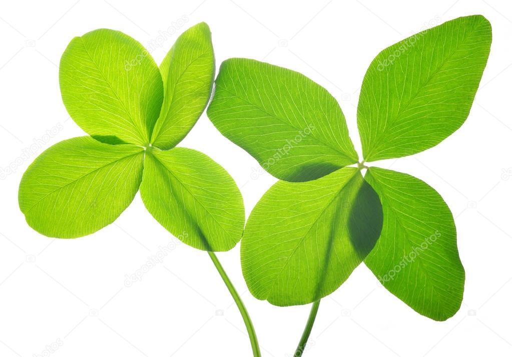 Four leaf clovers.