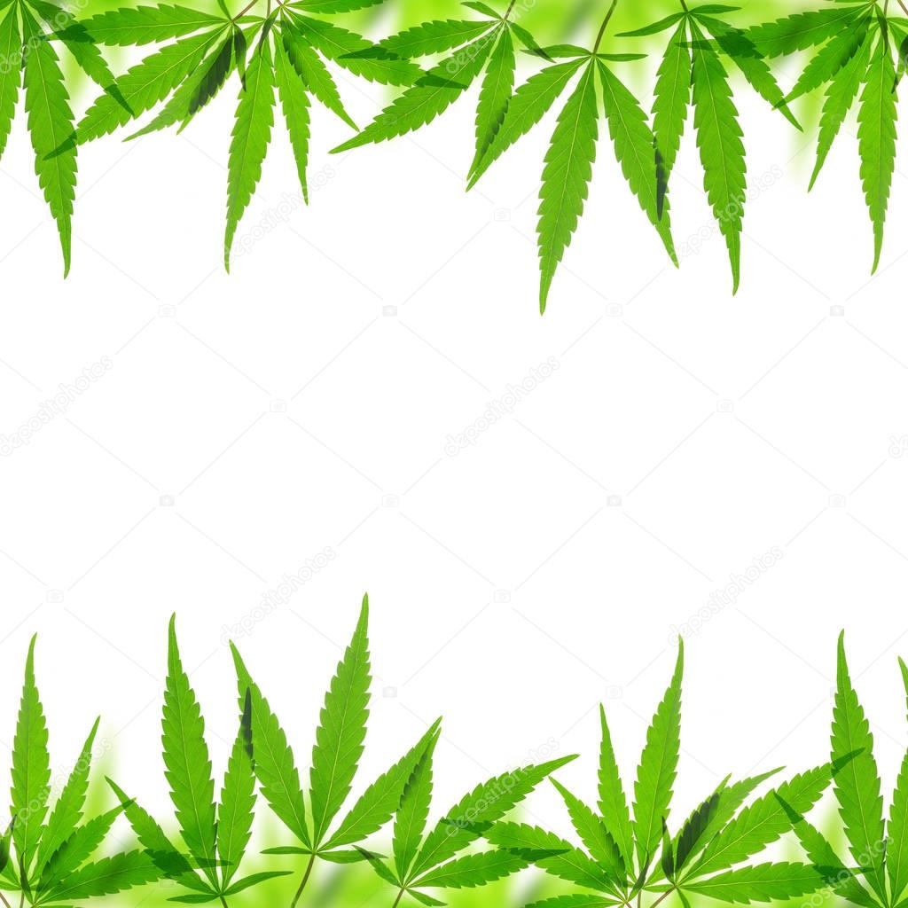 Frame from Cannabis leaf.