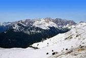 Fotografie Stádo jaků poblíž Passo Sella v Dolomitech. Itálie