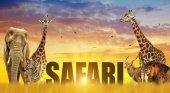 Elephant, giraffes, zebra and lion on the savannah at sunset.