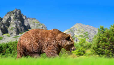 Brown bear in mountain landscape. Vysoke Tatry (High Tatras), Slovakia.