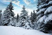 Zasněžená zimní krajina při západu slunce. Národní park Šumava v České republice