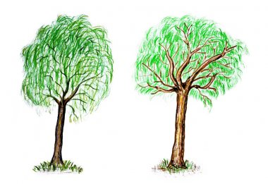 Hand drawn summer deciduous trees isolated on white background.