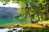 Černé jezero (Cerne jezero) v národním parku Šumava, Česká republika