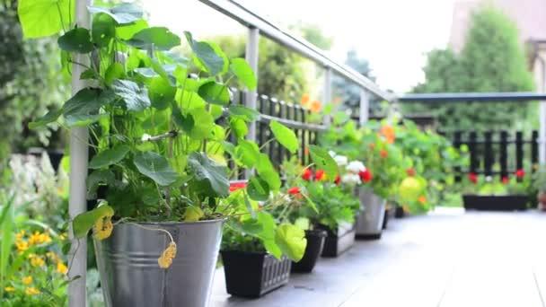 terasa s květinami