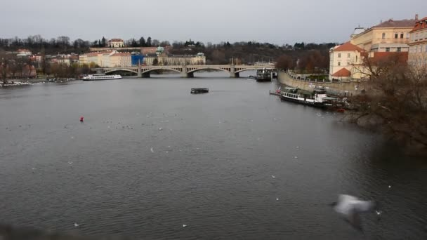 View of a Vltava river with cruising tourist ships and flying birds in Prague city centre.