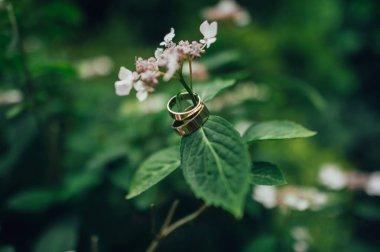 pair of golden wedding rings hanging on flower stem
