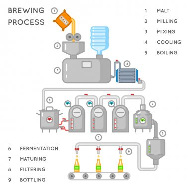 Beer process. Brewing infographic or brewery vector illustration