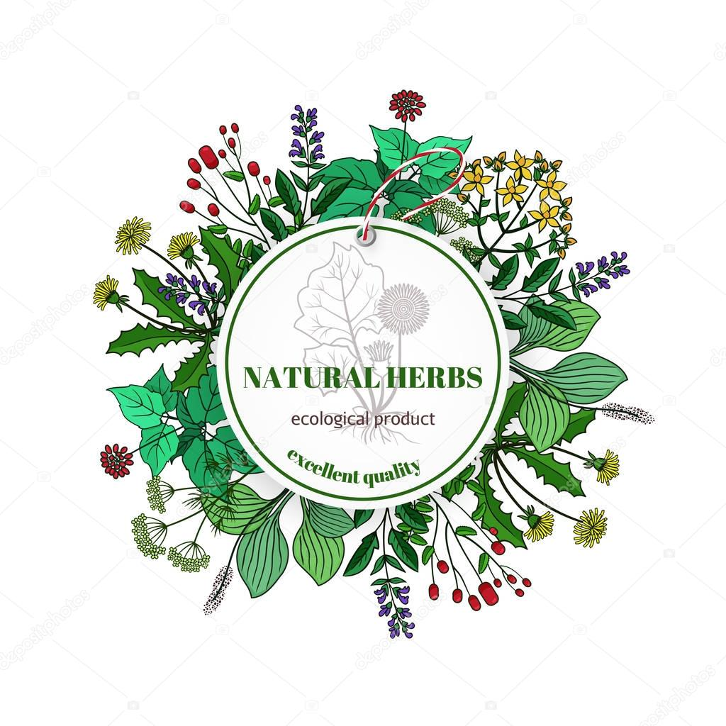 Hand drawn herbs and leaves label. Vector basil thyme, rosemary mint