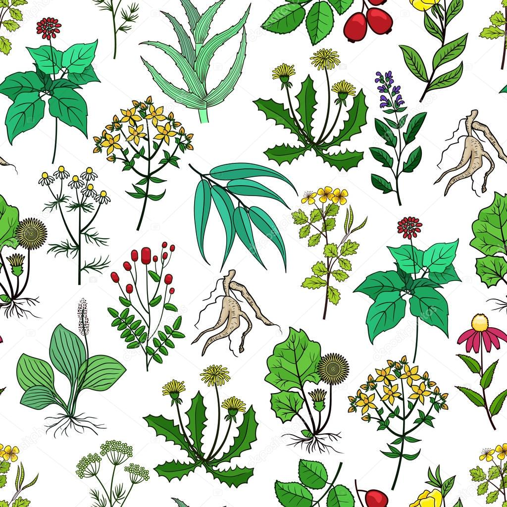 Drug plants and medicinal herbs vector background on white