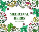 Wild medicinal herbs background