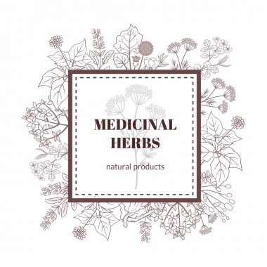 Medicine plant decorative background. Vector botanical illustration with hand drawn herbs