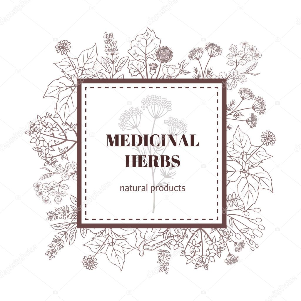 Medicine plant decorative background. Vector botanical illustration with hand drawn herbs