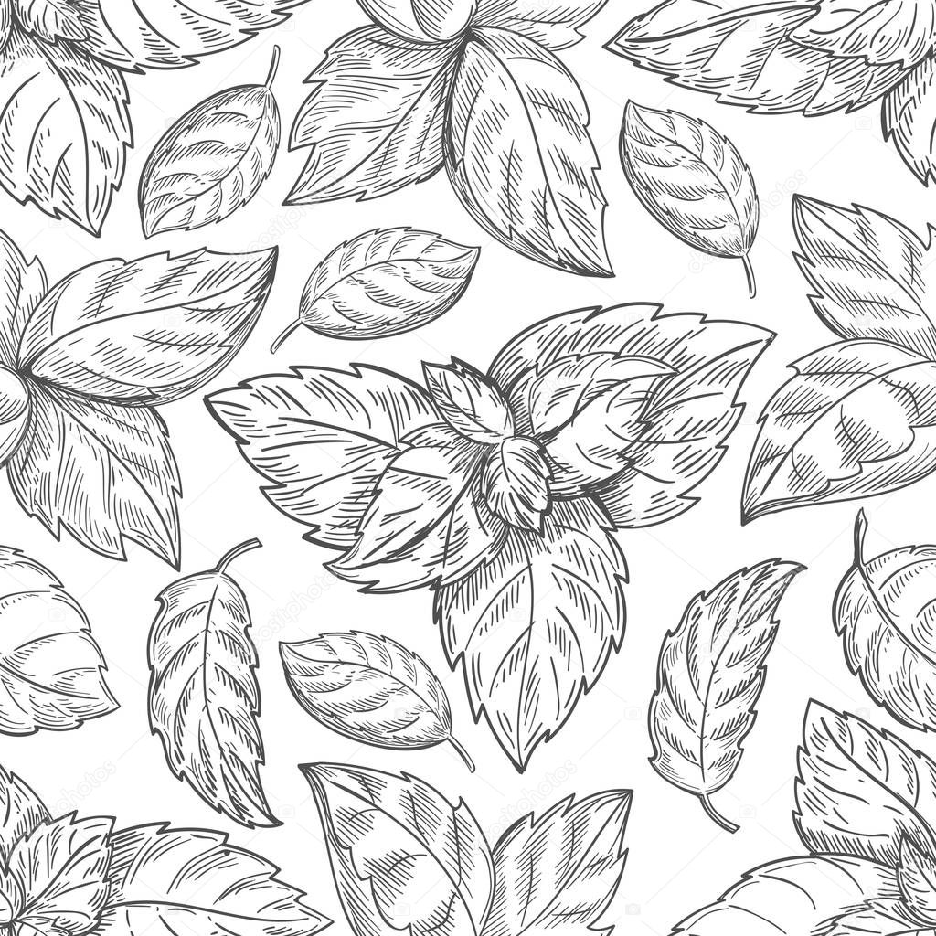 Mint leaf pattern. Peppermint leaves sketch vector background for tea wrapping paper