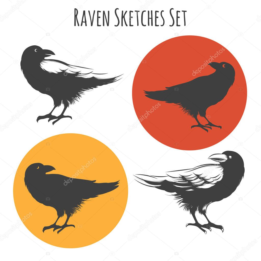 Vector raven or black crow bird ink drawing sketch with sketchy wings feathers.