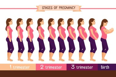 Pregnancy stages flat vector illustration. Pregnant woman and birth newborn trimester infographics