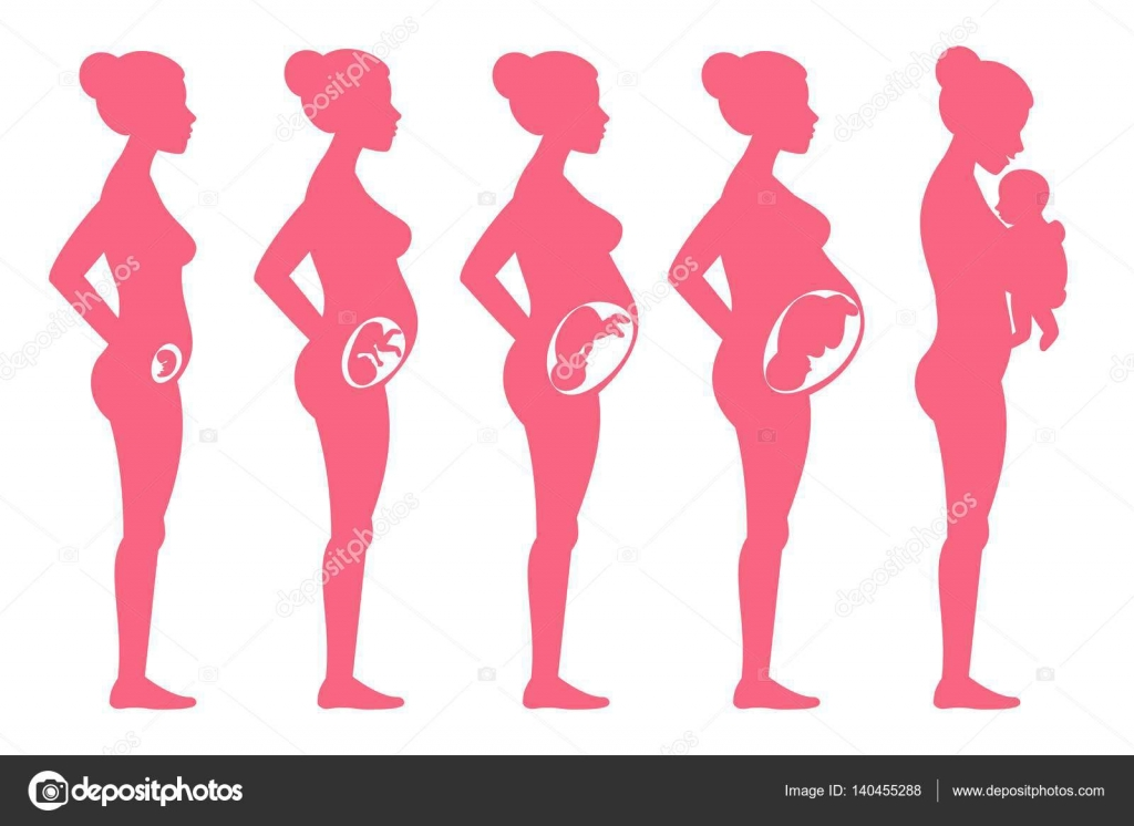 4f6d7286b Etapas del embarazo de feto. Puesta en escena mujeres embarazada y el parto  vector ilustración para infografía. Maternidad embarazo y saludable mujer  ...