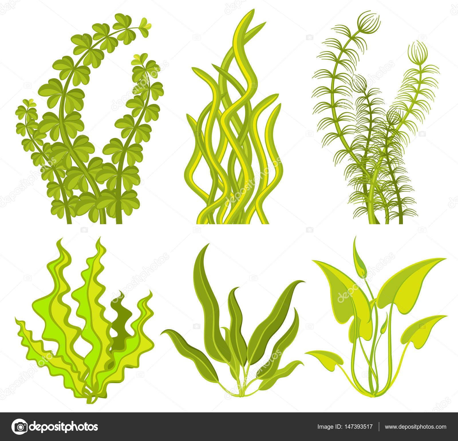 水中の海藻ベクトル要素 ストックベクター Mssa 147393517