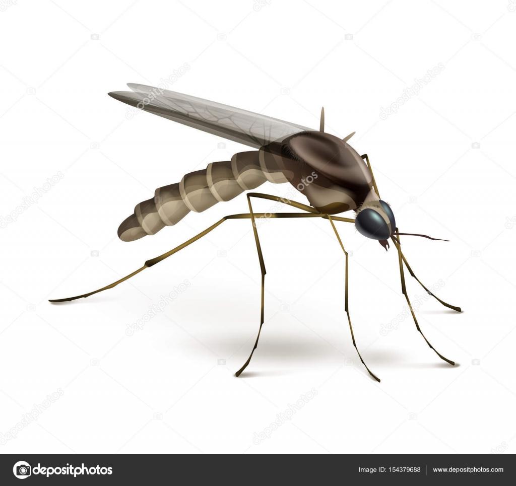 Zanzara Su Sfondo Bianco Vettoriali Stock Mssa 154379688