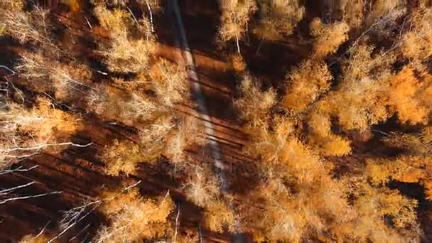 Aerial drone shot over the autumn european forest.
