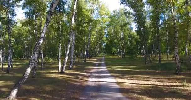 létající koryta březový les. strom lesy