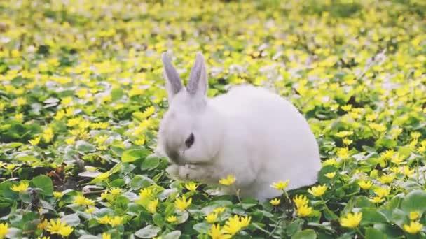 Krásný velikonoční zajíček na rozkvetlé louce. Jarní květiny a zelená tráva.