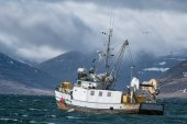 Fotografie Fishing vessel sails into a storm in the Westfjords in Iceland