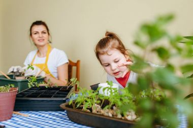 Woman transplanting sprouts and little girl examining different plants