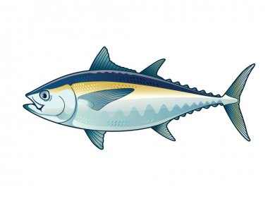 Tuna Blackfin Vector Illustration