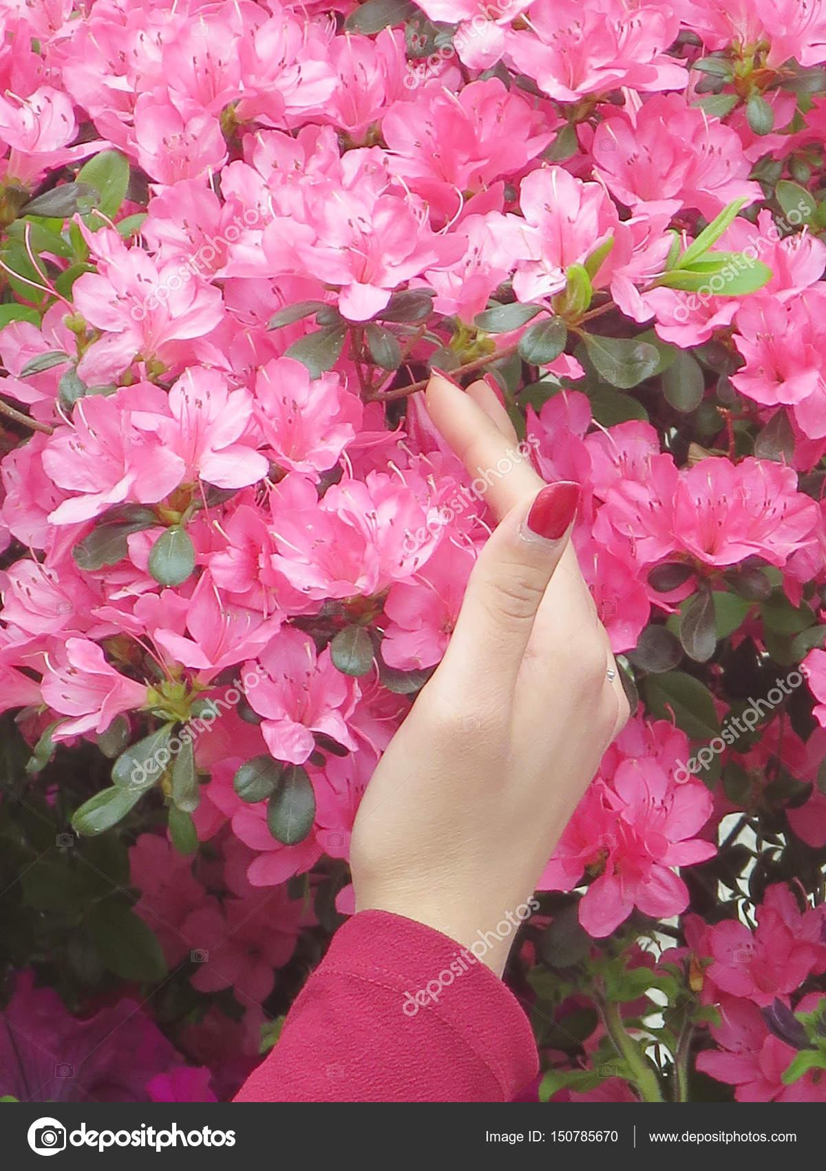 Profil De Fille Avec Des Fleurs Photographie Stanga190 C 150785670