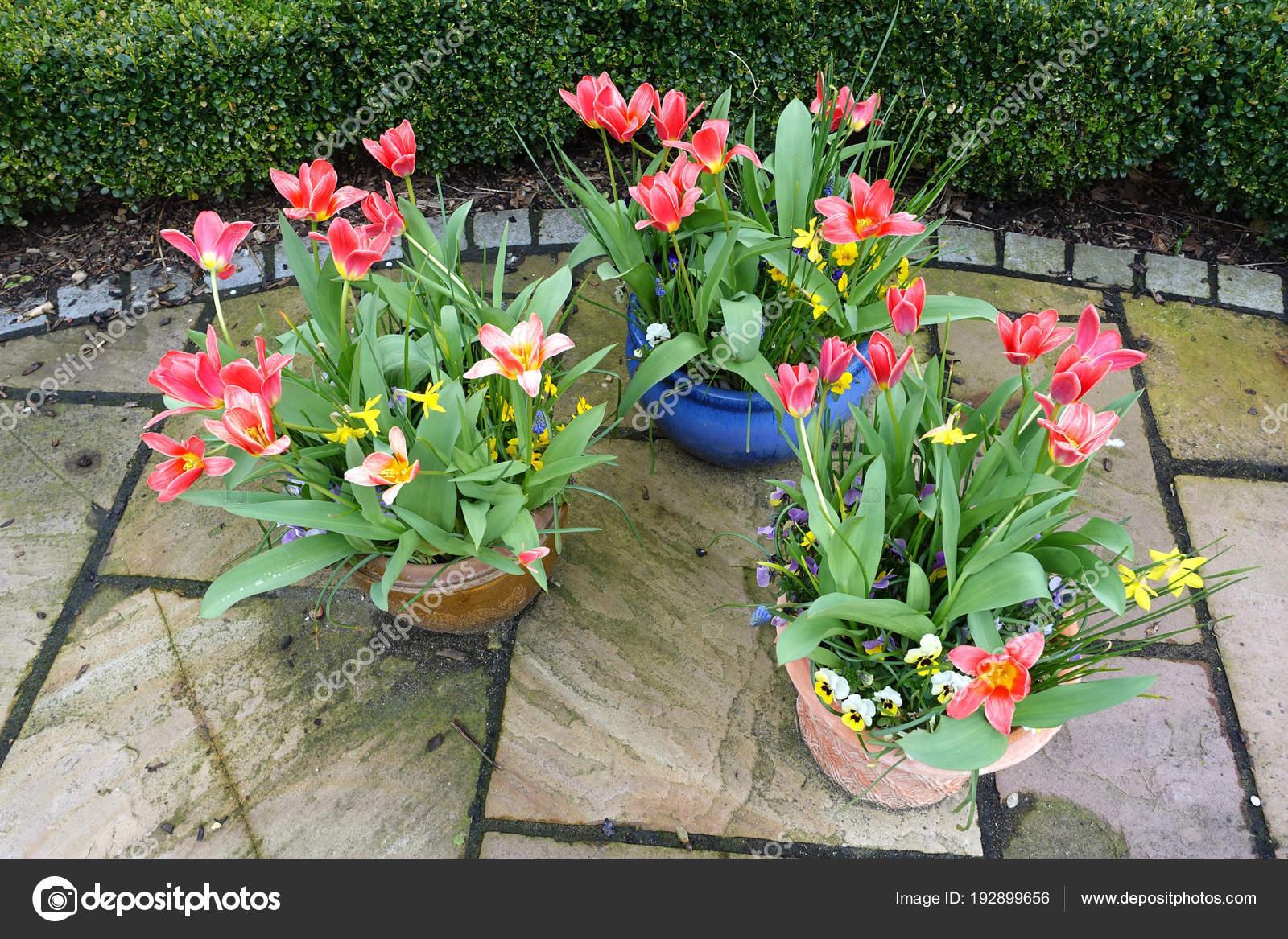 Wiosenne Kwiaty Doniczkach Ogrodzie Zdjecie Stockowe C Rocklights