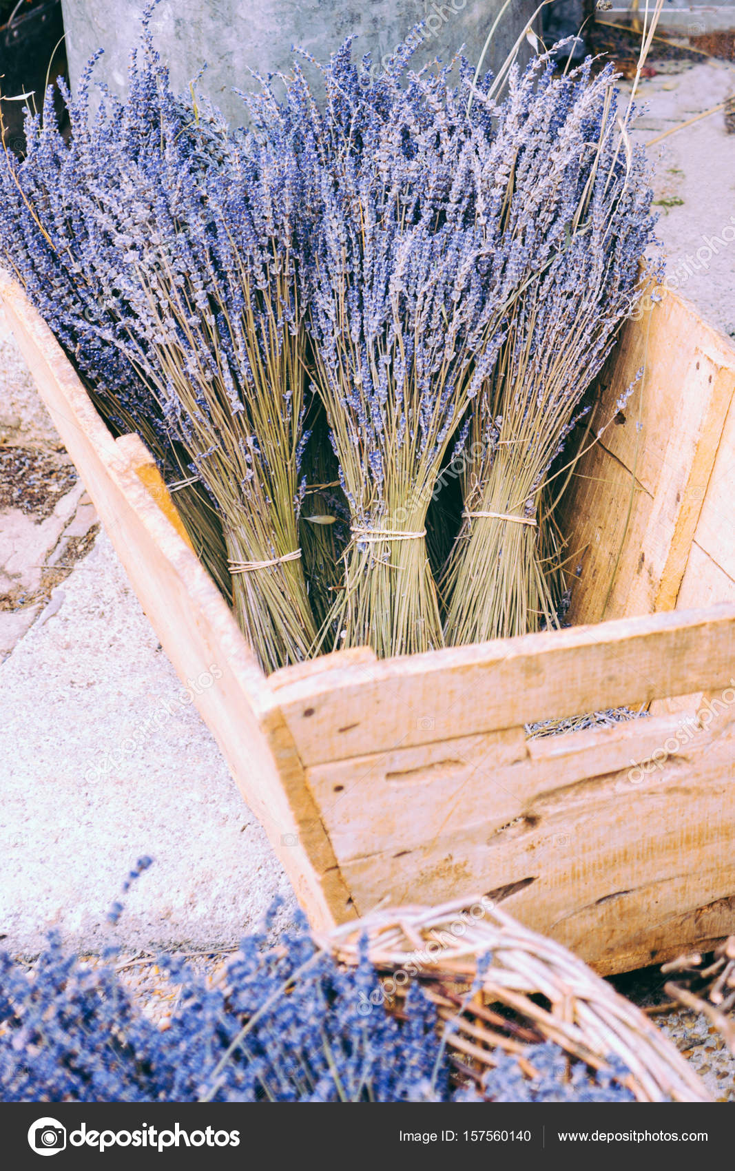 Several bunches of lavender in a wooden box Dried bundled