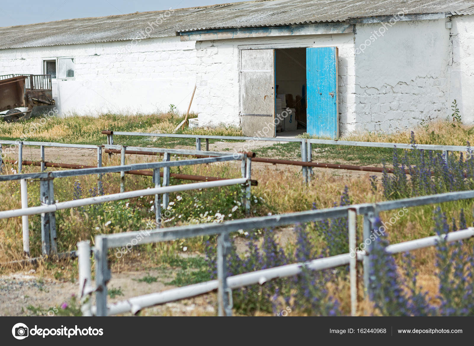 Pig Farm Outside In Summer Entry To The Stock