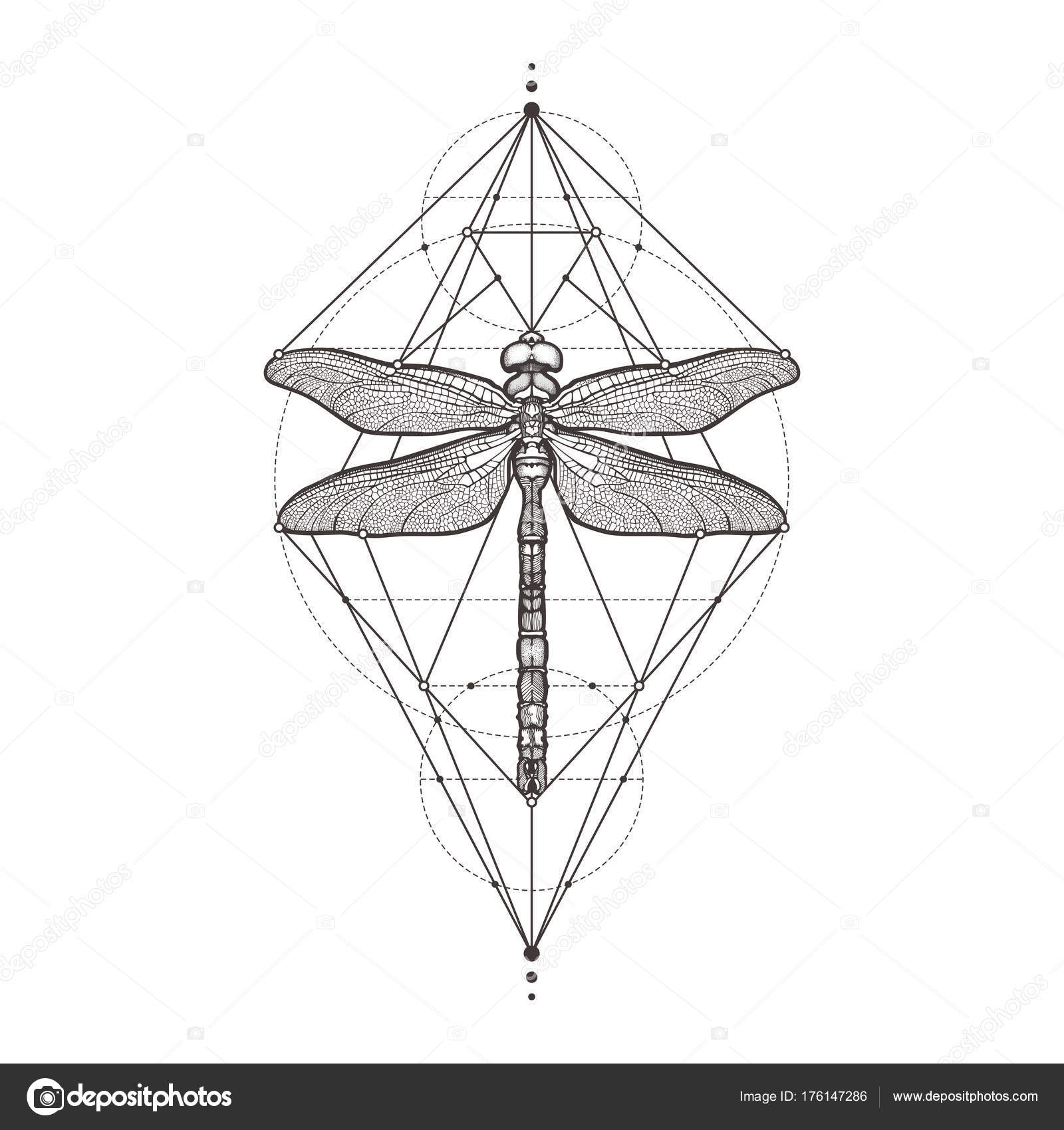 Negro libélula Aeschna Viridls, aislada sobre fondo blanco. Bosquejo ...