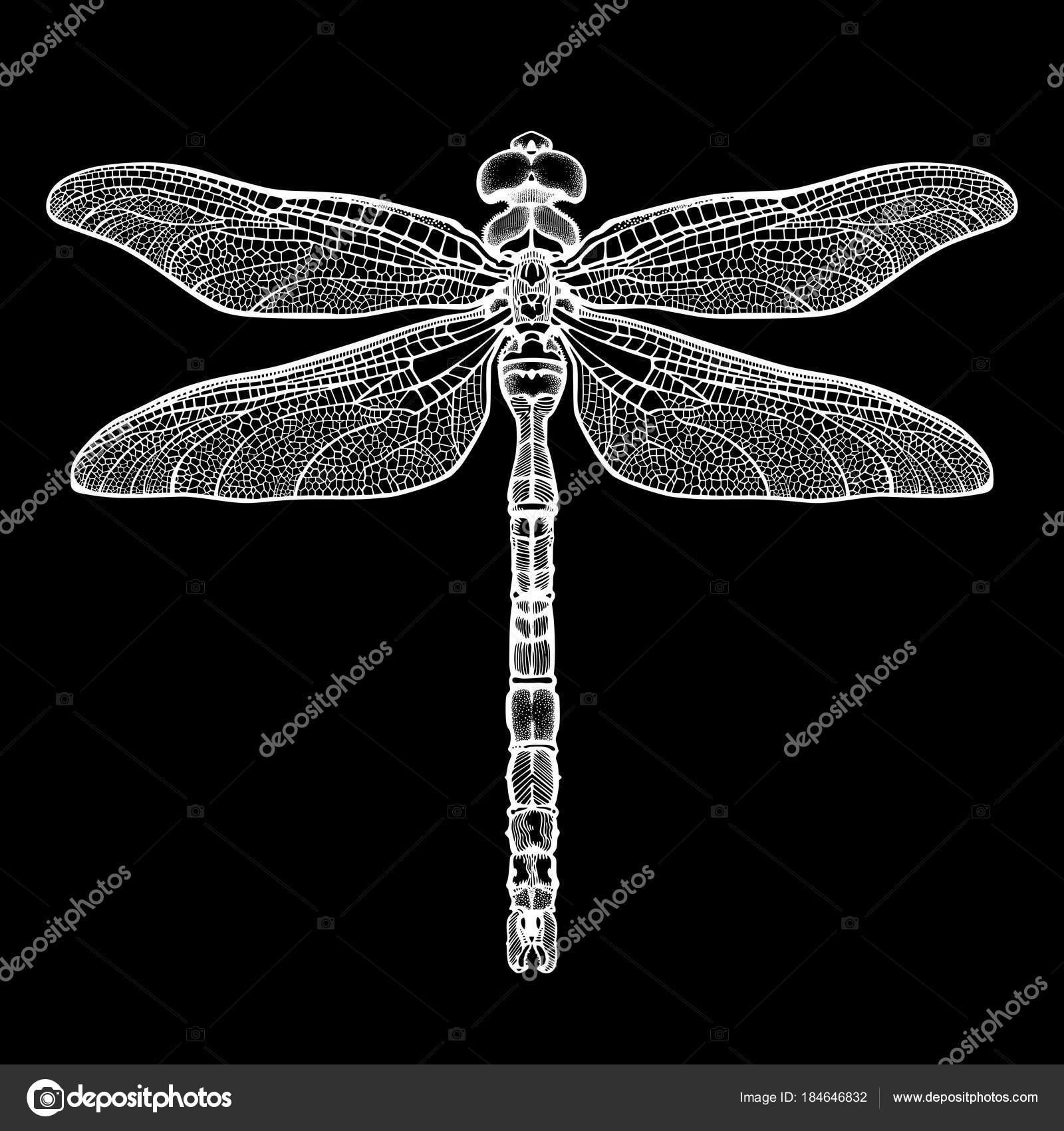 Blanco libélula Aeschna Viridls, aislada sobre fondo negro. Sketch ...