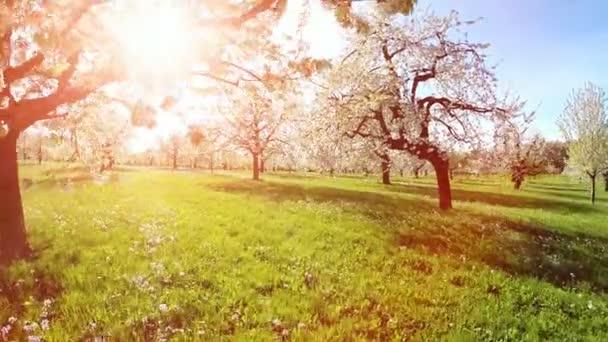 flying trough spring trees sunset summertime spring trees background