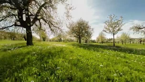Jarní stromy rostliny přírodní pozadí letní letecký pohled