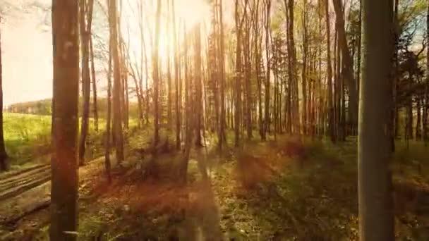 slunce odlesku světla příroda rostliny letecký pohled na stromy lesní silueta