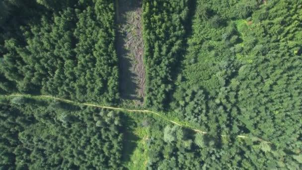 pohled na cesty hustým lesem