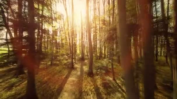 woods trees plants nature background summertime aerial view forest trees