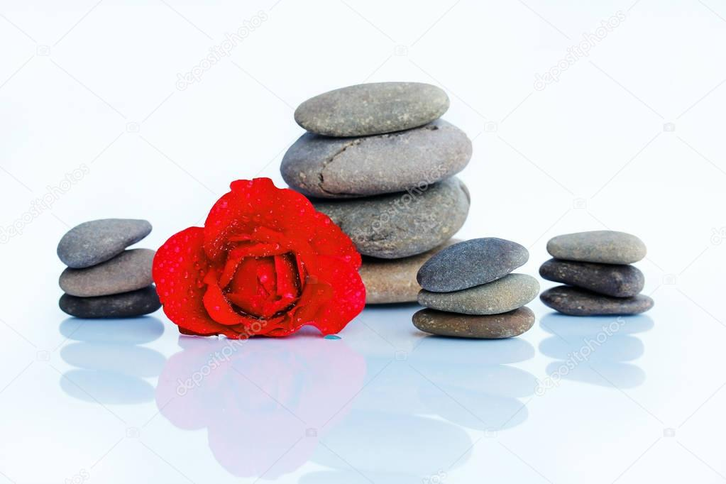 Red rose with water drops and stones